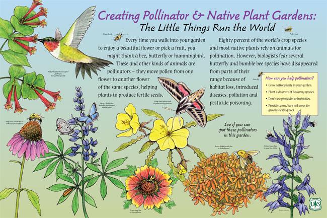 Native Plants Pollinators Nancy Seiler