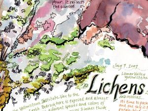 Lichens-thumb