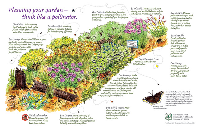 Native-Plants-and-Bees-Poster