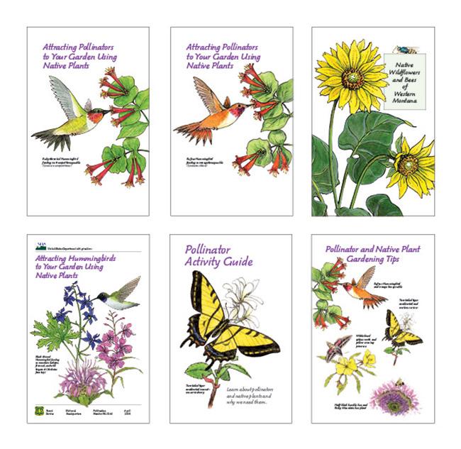 Pollination-Brochures